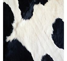 Cowhide Black and white Photographic Print