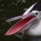Ahhhhh! A Pelican by richardseah