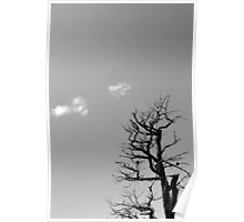 Dead Tree and Two Clouds BW Poster