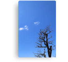 Dead Tree and Two Clouds Canvas Print