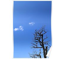 Dead Tree and Two Clouds Poster