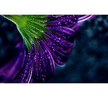 Moody Purple Photographic Print