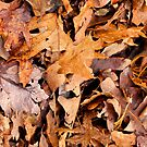Winter Leaves Camo  by NatureGreeting Cards ©ccwri