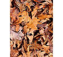 Winter Leaves Camo  Photographic Print