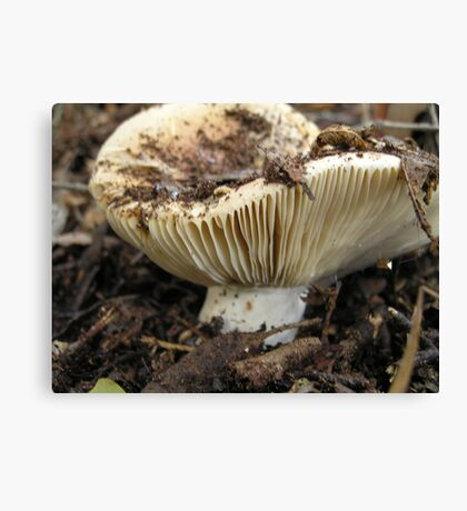 unnamed toadstool Canvas Print