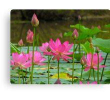 On Lotus Pond Canvas Print
