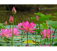 On Lotus Pond Photographic Print