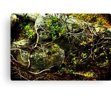 Reclamation Canvas Print