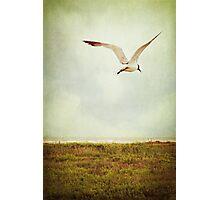 Where to Go? Photographic Print