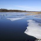 Thaw on the Marsh by Carole Andreas