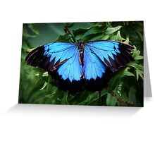 Monarch Butterfly of the Tropics Greeting Card