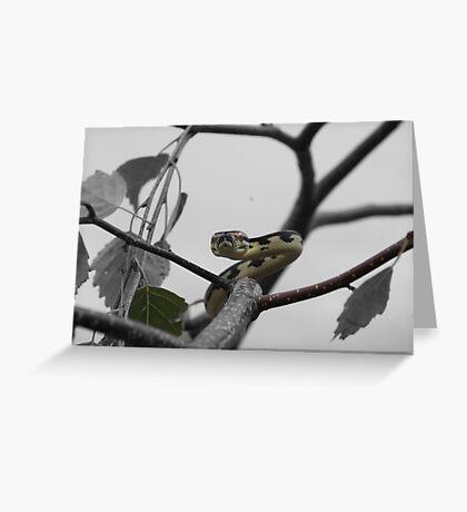 Select colouring Greeting Card