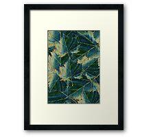 Leaves drawing  Framed Print