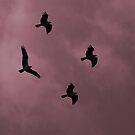 B.I.A.  (Birds in Action) by AshleyE