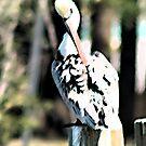 Pelican  by AshleyE