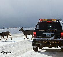 Blacktail Deer Escort by A.M. Ruttle