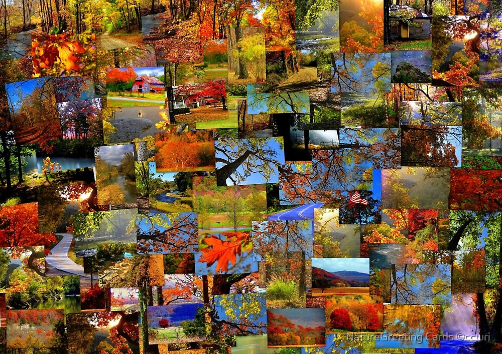 Autumn Dreams by NatureGreeting Cards ©ccwri