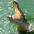 Crocodile by Dmitry Rostovtsev