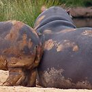 Hippo Baby by sarah ward