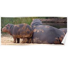 Hippo Baby Poster