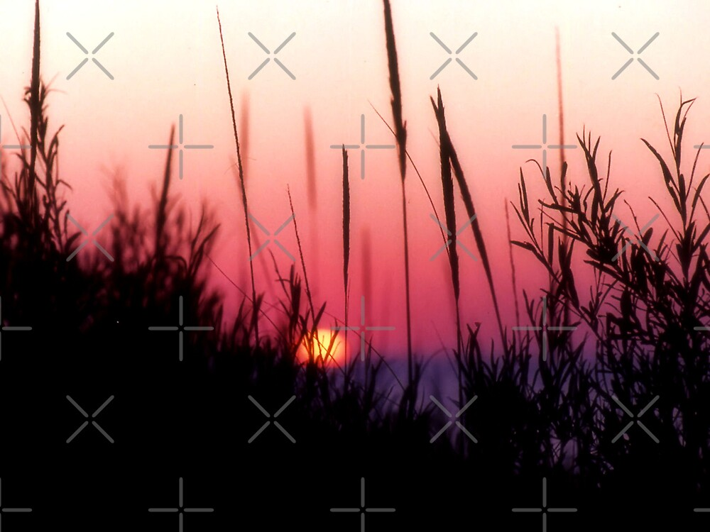 Sunset in Beach Grass II by Megan Noble