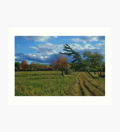 Finger Lakes National Forest Art Print