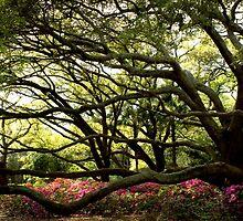 Live Oak by ANDREA PETERSON