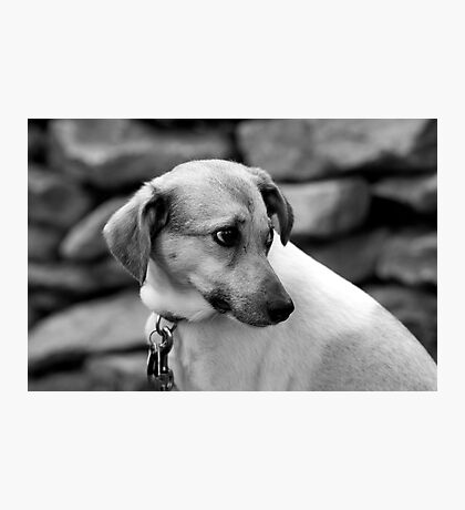 Lonely dog Photographic Print