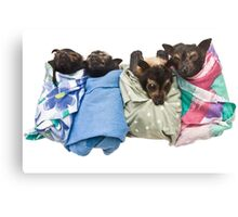 Baby Fruit Bats Canvas Print