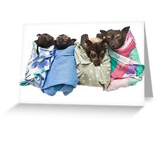 Baby Fruit Bats Greeting Card