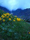Slovakia mountain flowers II by schizomania