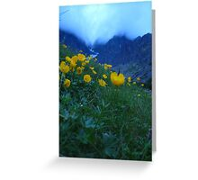 Slovakia mountain flowers II Greeting Card