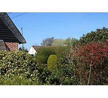 An Essex Garden at Easter Photographic Print
