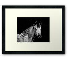 Equine Portrait Framed Print