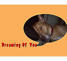 Dog Dreaming Of You Photographic Print