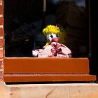 Rag doll looking out by indiafrank