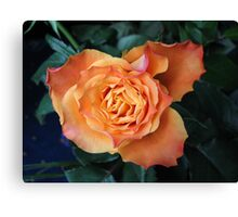 Soft and Gentle Rose Canvas Print