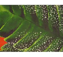 Leaf, close up. Photographic Print