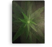 Plant close up overhead. Canvas Print