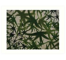 Leaves. Art Print