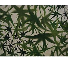 Leaves. Photographic Print
