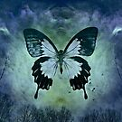 The Blue Butterfly by Scott Mitchell
