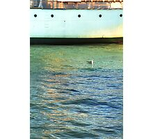 Seagull and Acadia Photographic Print