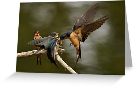 Swallows Feeding by Kenneth Haley