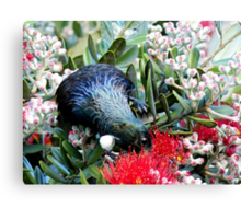 Delights From Nature - Tūī - Pohutukawa Tree - NZ Canvas Print