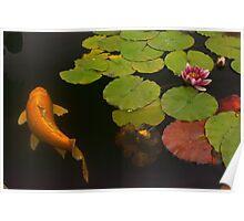 Orange Koi And Flower Poster