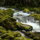 Brice Creek by Chappy