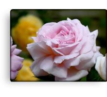 Love & Gratitude - Pink Rose - NZ Canvas Print