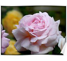 Love & Gratitude - Pink Rose - NZ Poster