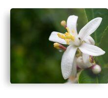 Lemon Flower Metal Print